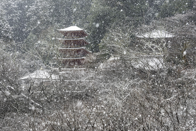 雪降る長谷寺