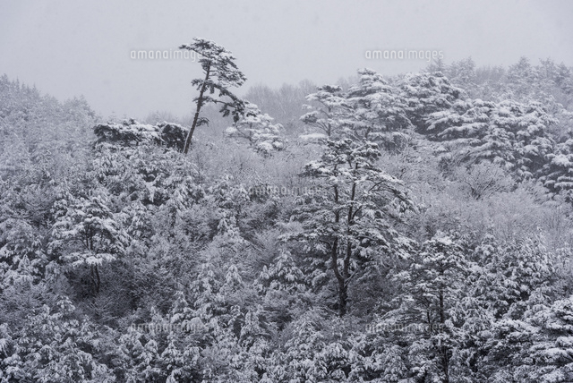 雪化粧する山