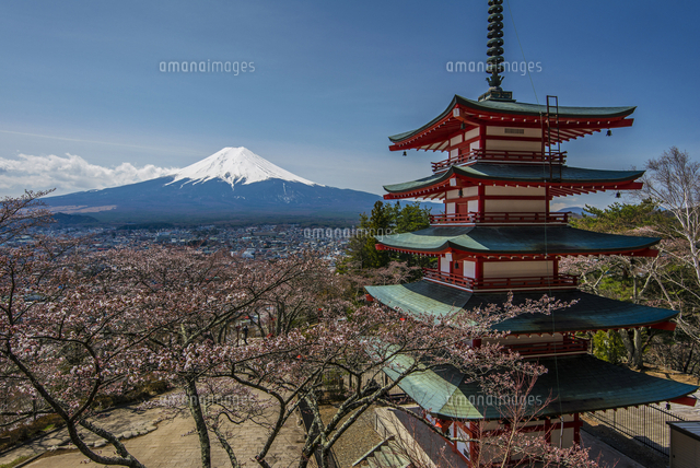 Chureito pagoda with blooming cherry trees and Mount Fuji in the background, Fujiyoshida, Yamanashi Prefecture, Japan 20088049311| 写真素材・ストックフォト・画像・イラスト素材|アマナイメージズ