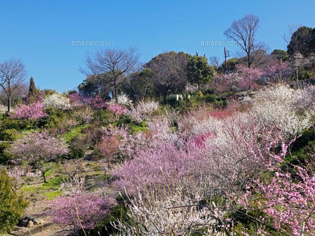 公園 世界 の 梅