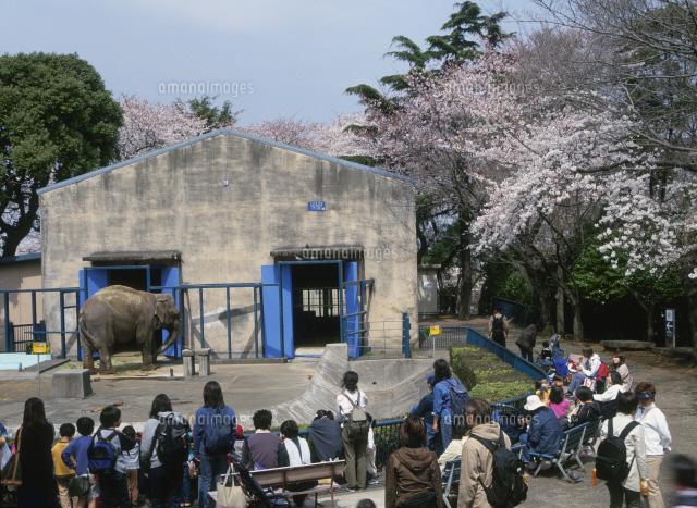 動物園 野毛 山