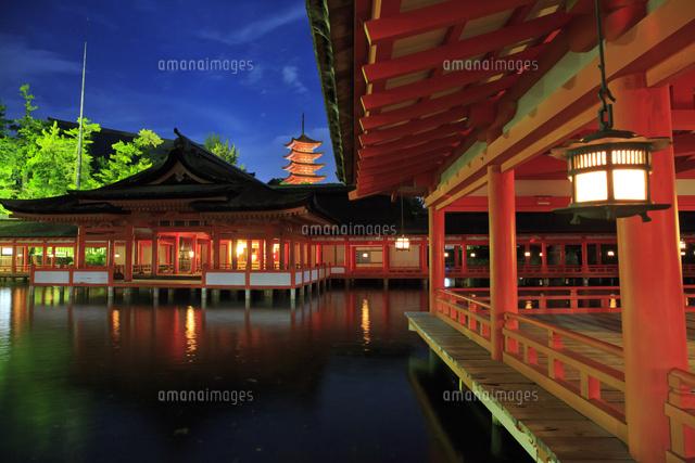 夜の厳島神社と五重塔[10521002848]の写真素材・イラスト素材|アマナイメージズ