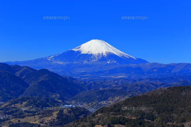 購入 神奈川 山