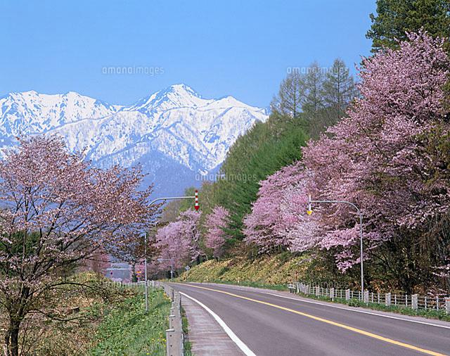 北海道 山 購入