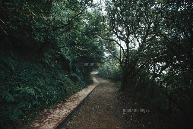 Footpath Amidst Trees In Forest 11115166833| 写真素材・ストックフォト・画像・イラスト素材|アマナイメージズ