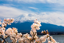 View Of Cherry Blossoms Against Sky
