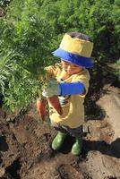 人参を収穫する男の子 10467001402| 写真素材・ストックフォト・画像・イラスト素材|アマナイメージズ