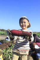 サツマイモ堀りする男の子 10467001403| 写真素材・ストックフォト・画像・イラスト素材|アマナイメージズ