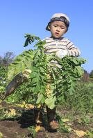 大根を収穫する男の子 10467001435| 写真素材・ストックフォト・画像・イラスト素材|アマナイメージズ