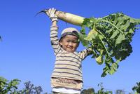 大根を収穫する男の子 10467001437| 写真素材・ストックフォト・画像・イラスト素材|アマナイメージズ