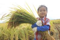 稲を収穫する男の子 10467001491| 写真素材・ストックフォト・画像・イラスト素材|アマナイメージズ