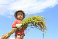 稲を抱えた男の子 10467001494| 写真素材・ストックフォト・画像・イラスト素材|アマナイメージズ