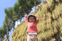 はさがけされた稲穂の前に立つ男の子 10467001502| 写真素材・ストックフォト・画像・イラスト素材|アマナイメージズ